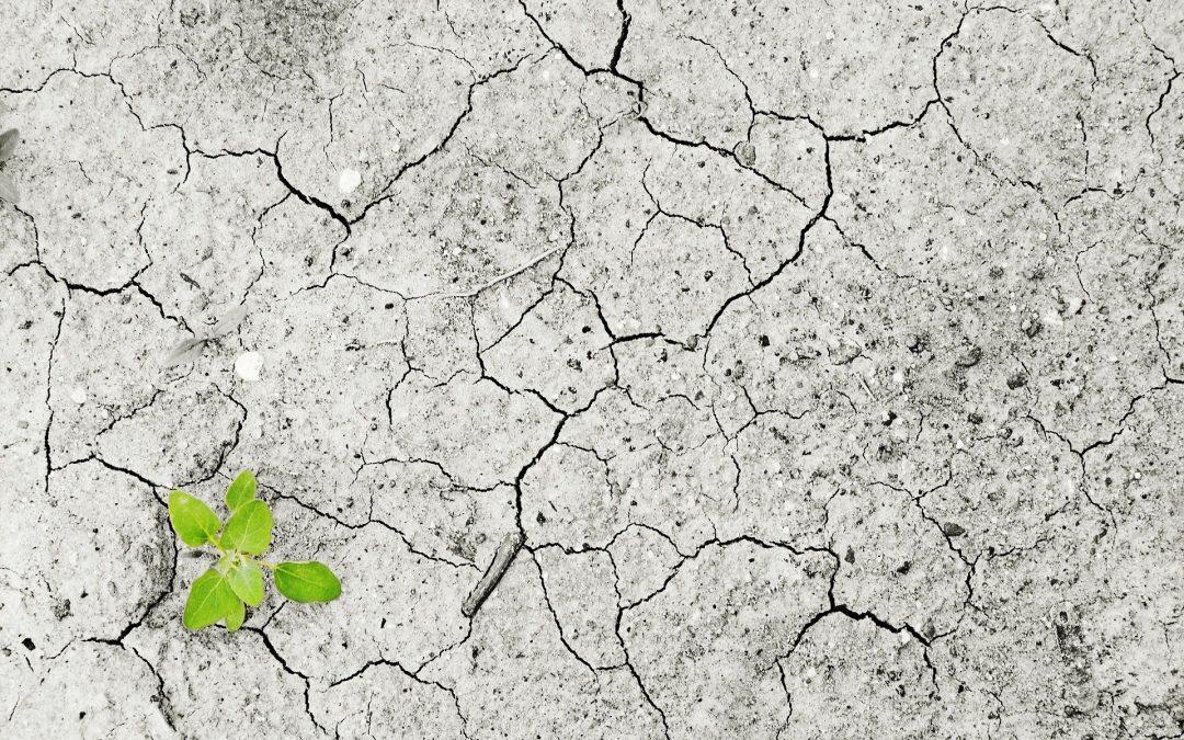 Question écrite concernant la pollution des sols.